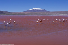 Bolivia, Laguna Colorada (OsPassosDoGatoPreto) Tags: blue sky lake mountains southamerica clouds landscape volcano desert flamingo bolivia latin andes altiplano highaltitude redlake potosi lagunacolorada andesmountainrange lacordilleradelosandes altiplanolakes