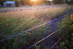 Wild Grass, Contre Jour (David's_silvershots) Tags: usa grass texas fuji fujifilm contrejour aledo xt1