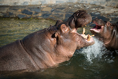 pairi daiza (@lvr) Tags: animals zoo nikon animaux paradisio daiza d4s pairi pairidaiza