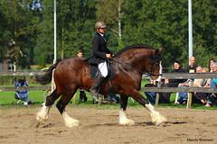 IMG_4099-k (Mandy Bramavi) Tags: show horse shire
