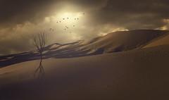 Sense (Federico Sciuca) Tags: landscape photo google sand nikon desert fineart marocco conceptual edit immagini d5000