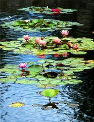 Pond of Beauty