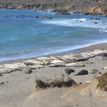 "Elephant Seal Vista Point <a style=""margin-left:10px; font-size:0.8em;"" href=""http://www.flickr.com/photos/127467040@N04/15198851429/"" target=""_blank"">@flickr</a>"