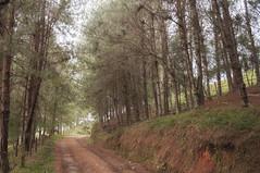 Camino al bosque. (David Bermdez Medina) Tags: naturaleza tree green nature arbol colombia arboles bisque antioquia