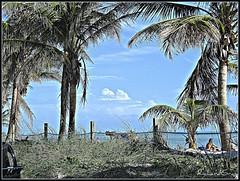 2270474456_a1df596315_o (gray.florie) Tags: ocean sky beach clouds palms paradise picnik floriegray appenninosettentrionalealpinatura floriegrayfloriegrayflorencetomasulograytomasulofloriefloriegraycom florencegray