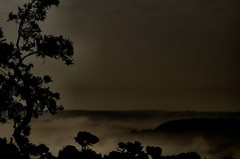 Monts du Cotentin (gonepterix) Tags: manche monts collines cotentin brumes montsducotentin