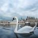 Magic Swan at Chantilly