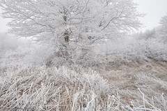 Frozen (Hector Prada) Tags: bosque hielo invierno cencellada opakua frio arbol paisvasco forest ice winter cold tree spain nikkor niebla fog mist oniric atmosfera nature landscape rural frost weather field grey