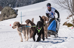 Pudel racing ;) (ラルフ - Ralf OFFLINE) Tags: ch gadmen hunde naturlandschaft schnee schweiz snow switzerland umwelt winter schlittenhunderennen sleddog swiss theworld pudel