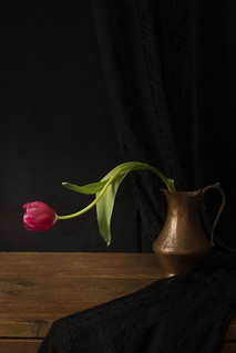 Single Red Tulip