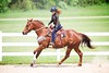 Horse Show (JustJamieLeigh) Tags: horse horses horseshow show horsebackriding horseback riding equestrian equines equine westernriding western cowgirl girl girls barrel racing barrelracing westerngames gaming