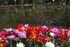 _DSC0847 (Riccardo Q.) Tags: parcosegurtàtulipani places parco altreparolechiave fiori tulipani segurtà