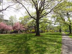 DSC00778 (TerrMys) Tags: cambridge ma spring massachusetts springtime cambridgeport