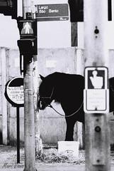 (Mari Viana) Tags: street light cidade urban blackandwhite bw horse film plaque postes trafficlight poste traffic sopaulo centro pb urbano rua filme cavalo placa pretoebranco semforo sinal placas cruzamento centrosopaulo