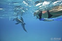 WildQuest Dolphin Swim - 9/2014 (Wildquest Bimini) Tags: wild swimming swim underwater dolphin snorkeling dolphins dolphinquest wildquest dolphinunderwater underwaterdolphin swimwithdolphin atmoji