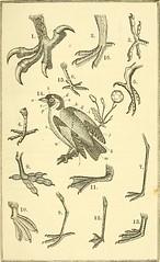Anglų lietuvių žodynas. Žodis genus phalaropus reiškia genties phalaropus lietuviškai.