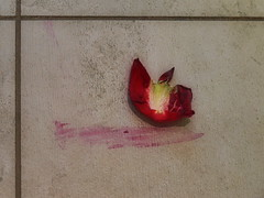 Fallen Rose Petal and Blood - The Color Blood - From the Secret Col