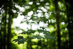 Hollingbury Woods (agataurbaniak) Tags: park wood trees light shadow blur tree green leaves 50mm sussex leaf blurry woods nikon brighton moody bokeh nikkor eastsussex 50mm12 ais d600 hollingbury nikkor5012 nikond600 nikkor50mm12 hollingburypark hollingburywoods agataurbaniak
