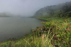 Kabut di Telaga Dringo   DIeng Plateau