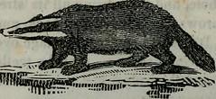 Anglų lietuvių žodynas. Žodis coarse-furred reiškia rupi-kailinių lietuviškai.