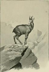Anglų lietuvių žodynas. Žodis caprine animal reiškia ožkos gyvūnų lietuviškai.