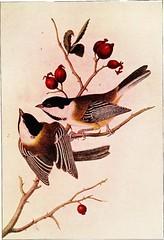 Anglų lietuvių žodynas. Žodis canary creeper reiškia kanarų vijoklis lietuviškai.