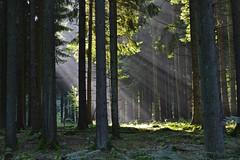 _DSC3112 ein Fenster im Wald - a window in the forest (baerli08ww) Tags: light summer sun mist tree green colors fog forest germany landscape deutschland licht nikon nebel sommer natur grn landschaft sonne wald baum sonnenstrahlen sunb