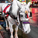 Times Square Workhorse