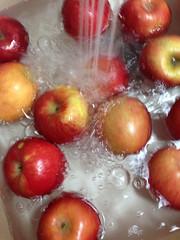 image (Paul Beppler) Tags: apfel pple rosaceae epple eppel ebble rosengewchs bbel rosengewchse ebbel bble rosengewex