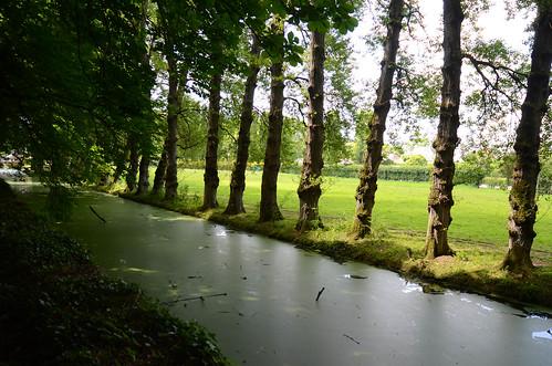 Foggy Water Road