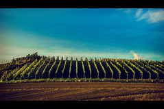 I will buy their wine (Melissa Maples) Tags: cinema green field clouds movie denmark countryside vineyard vines nikon europe wine widescreen grapes letterbox nikkor cinematic 169 vr afs  18200mm f3556g  18200mmf3556g d5100 annissenord