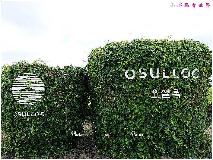 濟州島innisfree館 綠茶博物館 (53).JPG
