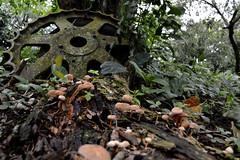 rueda (dav206) Tags: mushroom wheel gear fungus rueda hongos engranaje