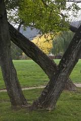 A2094 (lumenus) Tags: trees campus australia canberra anu act
