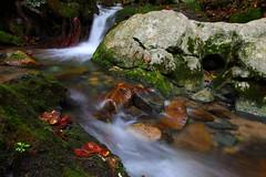Gap Creek (MarcusDC) Tags: water moss tennessee cascade gapcreek cumberlandgapnationalhistoricpark