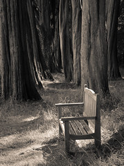 Plas Newydd woodland seat 02 sep 14 (Shaun the grime lover) Tags: trees tree monochrome wales woodland bench furniture seat trunk nationaltrust plas ynysmon anglesey newydd