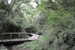 Koajiro Wood (kzmiz) Tags: wood japan nd kanagawa density neutral miura misaki nd4 koajiro nikond800e