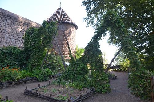 Le château du Haut-Koenigsbourg.Le jardin médiéval.4