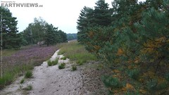 Heathland with Pine Trees (C0038) (Stefan Beckhusen) Tags: flowers plants flower color tourism nature woodland germany landscape colorful day outdoor hiking sandy relaxing explore pines silence naturereserve heath relaxation moor bog pinetrees geest discover blooming heathland lonesomeness lowersaxony flourishing culturallandscape dryland bloomy touristdestination purplemoorgrass crossleavedheath lneburgheath populardestinations lunenburgheath natureharmony heathgrass ericatetralis wetsandheath