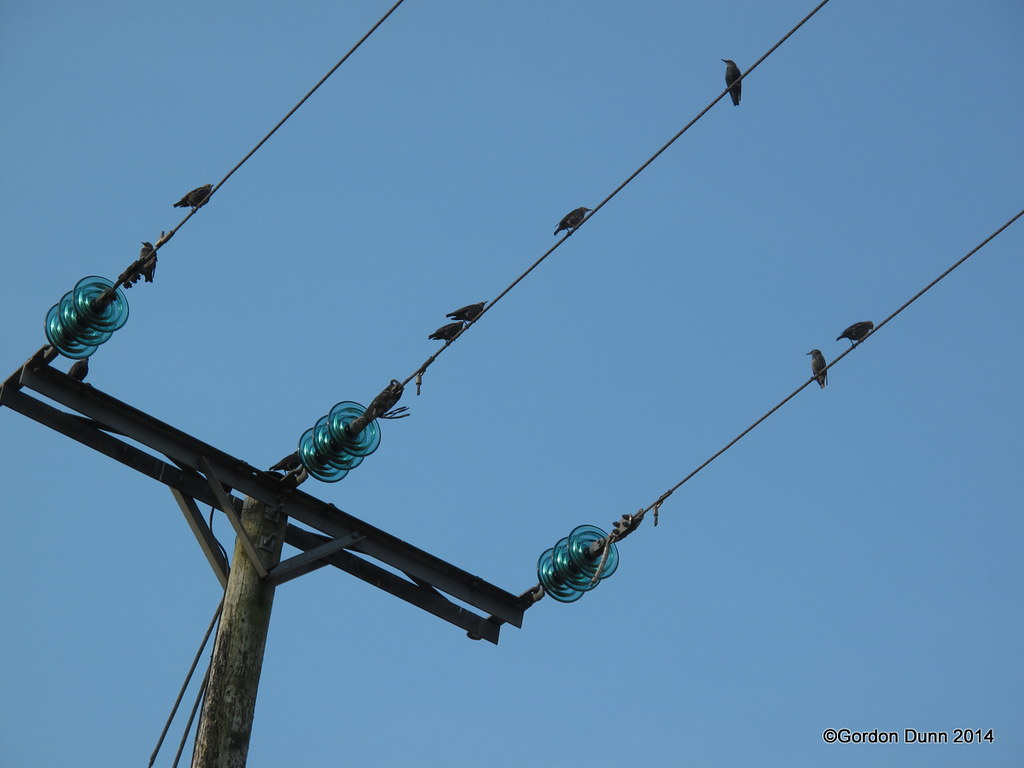The World\'s Best Photos of ireland and wires - Flickr Hive Mind