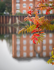signs of autumn 03 sep 14 (Shaun the grime lover) Tags: autumn reflection tree water season manchester canal warrington berry ship berries cheshire basin rowan walton mountainash