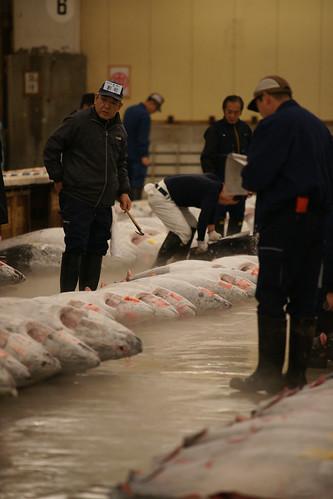 fishauction_checking_fish_quality_before_biding.jpg