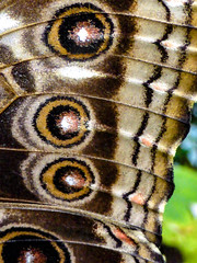 Fabric Wings (Steve Taylor (Photography)) Tags: insect butterfly brown green white fabric uk gb england greatbritain unitedkingdom bexley hallplace frayed worn eyes circles wing circle pattern texture oval round lines closeup macro