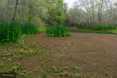 Armand Bayou Nature Center (kailtg) Tags: armand houston animals bayou nature swamp water texas unitedstates us