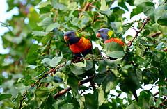 2014-06-06_17-05-40 (J Rutkiewicz) Tags: birds