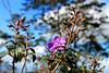 Detalhes (Jullie_BR) Tags: flores cores detalhes suavidade