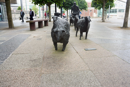 SHEEP ON THE ROAD BY DEBORAH BROWN - LANYON PLACE IN BELFAST