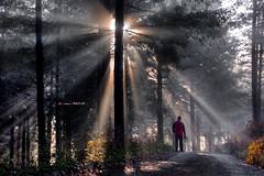 Ante el resplandor (Jabi Artaraz) Tags: light luz contraluz jon camino pat zb bruma argia basoa resplandor euskoflickr barazar hacesdeluz jartaraz jonagirre aldoia