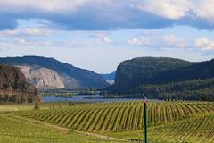 Blue mountain vineyard (bradlebedoff) Tags: lake canada mountains canon landscape vineyard britishcolumbia okanagan scenic 70200 okfalls 70d