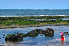 Rock Pool (karllaundon) Tags: family sea summer sun cute beach fun happy seaside day child laugh northeast rockpool redcar